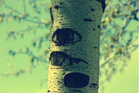 El árbol que mira