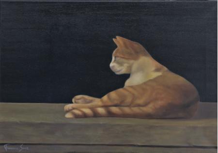 Noche y gato