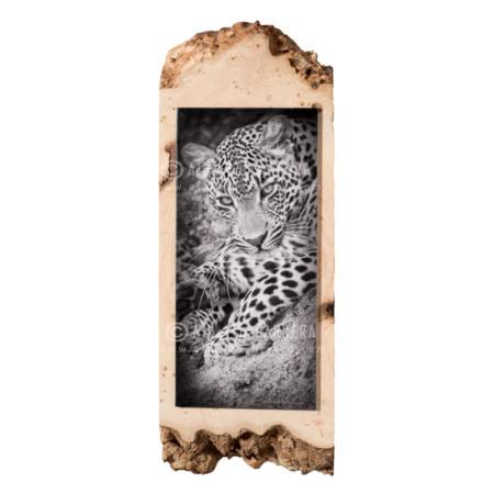 Fine Art Leopardo Africano sobre madera de Fresno