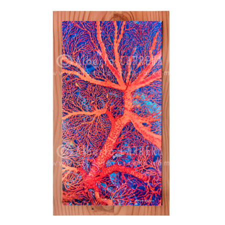 Fine Art Gorgonia Sulawesi sobre madera de Secuoya