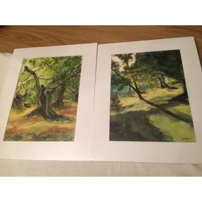 Árboles y sombras