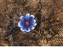 Flor nacida